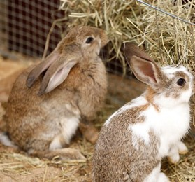 Karmy dla królików